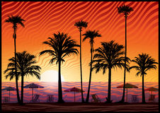 Palm trees silhouette at sunset. Royalty Free Stock Image