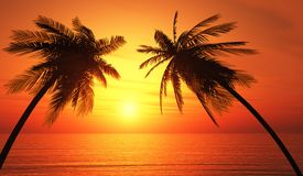 Palm trees silhouette tropical ocean sunset. Two palm trees silhouetted against a golden orange tropical ocean sunset Royalty Free Stock Photography
