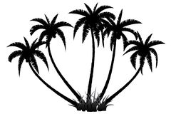 Palm trees silhouette Stock Photo