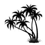 Palm trees silhouette Stock Photo