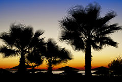 Palm trees silhouetted against a sunset Stock Images