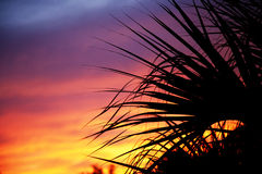 Palm trees silhouetted against the sunset Royalty Free Stock Photos