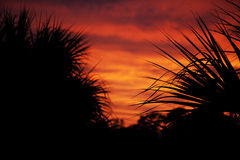 Palm trees silhouetted against the sunset Royalty Free Stock Photography
