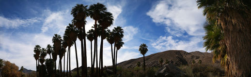 Palm Trees Silhouetted - Panorama Stock Photo