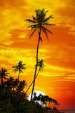 Palm trees silhouetted Stock Photos
