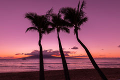 Palm Trees Silhouetted at Sunset Royalty Free Stock Photos