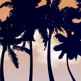 Palm trees silhouettes  Stock Photography