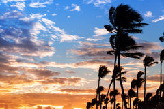 Palm trees silhouettes on colorful morning sky background Stock Photography