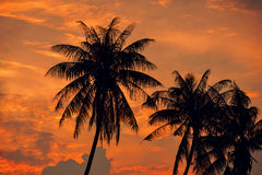 Palm Trees silhouettes on the Colorful Sky background Stock Image