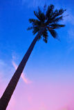 Palm Trees silhouettes on the Colorful Sky background Royalty Free Stock Image