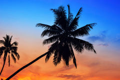 Palm Trees silhouettes on the Colorful Sky background Royalty Free Stock Photo