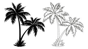 Palm Trees, Silhouettes and Contours Stock Images