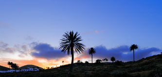 Palm trees silhouettes, Haria, Lanzarote Stock Photo