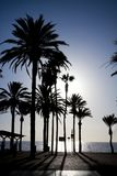 Palm trees silhouettes on the seafront Stock Photo