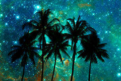 Palm trees silhouettes, starry night. Background Royalty Free Stock Image