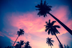 Palm trees silhouettes on the sunset Royalty Free Stock Photo