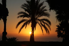 Palm trees silhouettes at sunset in Spain Royalty Free Stock Photo