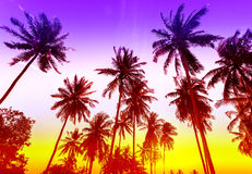 Palm trees silhouettes on tropical beach at sunset Royalty Free Stock Image