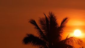 Palm trees silhouettes on tropical beach at vivid sunset time. Exotic trees and big orange sun. Travel, Tourism, vacation concept background. Paradise Island stock video footage