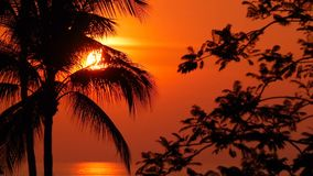 Palm trees silhouettes on tropical beach at vivid sunset time. Exotic trees and big orange sun. Travel, Tourism, vacation concept background. Paradise Island stock video