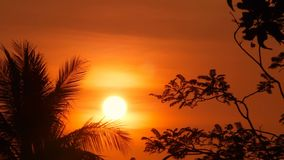 Palm trees silhouettes on tropical beach at vivid sunset time. Exotic trees and big orange sun. Travel, Tourism, vacation concept background. Paradise Island stock footage