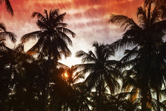 Palm trees silhouettes under red tropical sky Royalty Free Stock Photo
