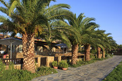 Palm trees on the site of Anthemus Sea Beach Hotel Stock Photography
