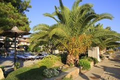 Palm trees on the site of Anthemus Sea Beach Hotel Stock Images