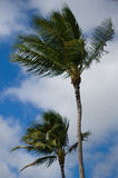 Palm Trees and Sky Royalty Free Stock Image
