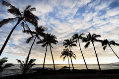 Palm trees and sky. A row of palm trees by the ocean against a blue cloudy sky Stock Photos