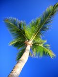 Palm trees and sky Stock Photos