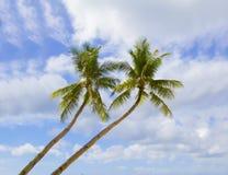 Palm trees on sky Stock Photos