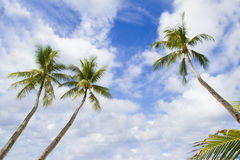 Palm trees on sky Royalty Free Stock Photos