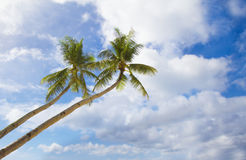 Palm trees on sky Stock Photo
