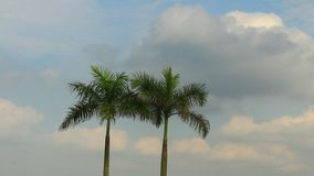 Palm trees and sky stock video