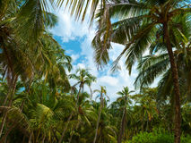 Palm trees and sky. Royalty Free Stock Image