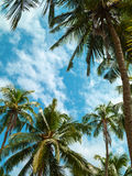 Palm trees and sky. Stock Photos