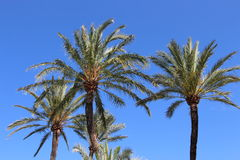 Palm trees in the sky Royalty Free Stock Images
