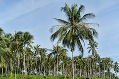 Palm trees on  sky background Royalty Free Stock Image