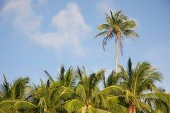 Palm trees on sky background Stock Photos