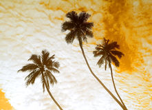 Palm trees and sky Royalty Free Stock Photo