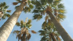 Palm trees on the sky background - 4K. I have a lot of videos about holiday on the sea. Please check it out stock footage