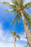 Palm trees on sky background Stock Photo
