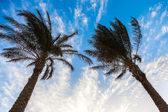 Palm trees and sky Royalty Free Stock Images