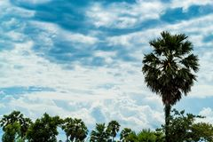 The palm trees and the sky with clouds beautiful. The palm trees and the sky with clouds beautiful , Thailand Royalty Free Stock Photography
