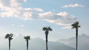 Palm trees and sky, mountains. Beautiful view of nature stock footage