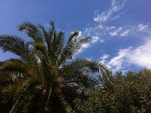 Palm trees and sky Royalty Free Stock Photos
