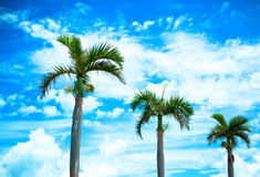Palm trees and sky Stock Image