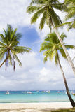 Palm trees on sky and sea background Stock Image