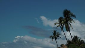 Palm trees and sky. Three palm trees with a cloudy sky in the background stock footage